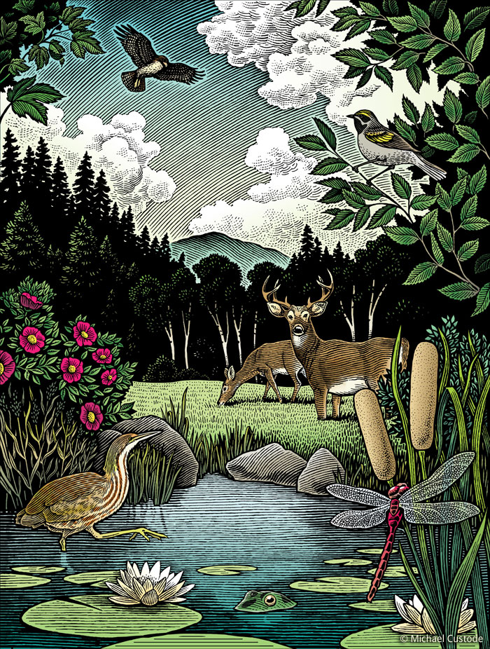 Woodcut-style illustration of a woodland scene with a pond in the foreground. In the foreground a dragonfly is on a bullrush. A bittern is in the water while two deer are in the field. A hawk flies overhead.